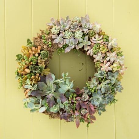 succulent cuttings wreath purple pink blue green orange string of pearls echeveria sedum aeonium kalanchoe